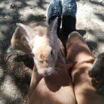 うさぎの島で餌やり!大久野島のうさぎの餌はどこで買う?